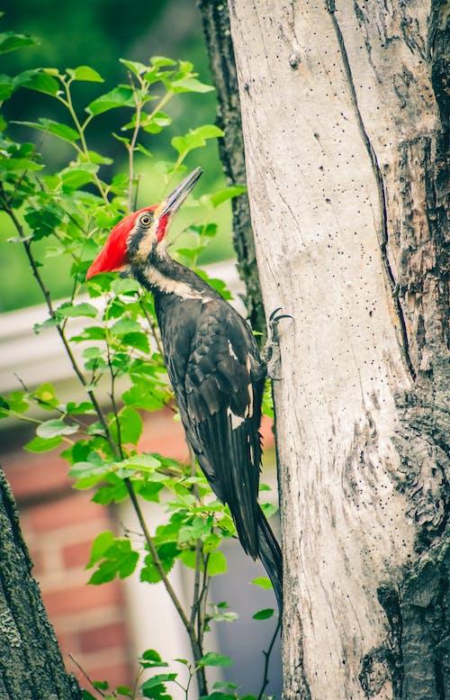 Gratis arkivbilde med blad, dyreliv, fugl, gress