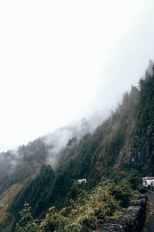 Imagine de stoc gratuită din acoperit de nori, alpin, arbore
