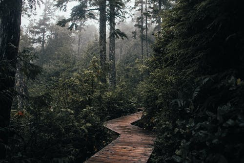 Narrow wooden pathway surrounded with green trees and plants growing in woodland in nature in daylight