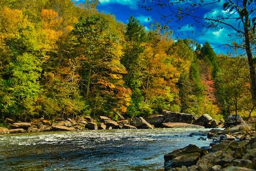 Free stock photo of blue water, dam, fall foliage, gauley river
