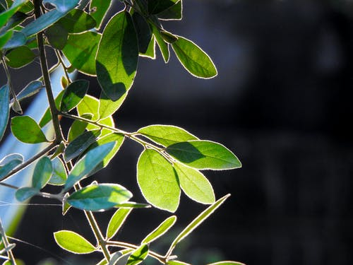 Free stock photo of bamboo, bamboo leaf, beautiful, boulders