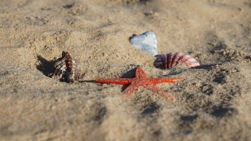 Gratis lagerfoto af dyreliv, hav, hvirvelløse, lukke op