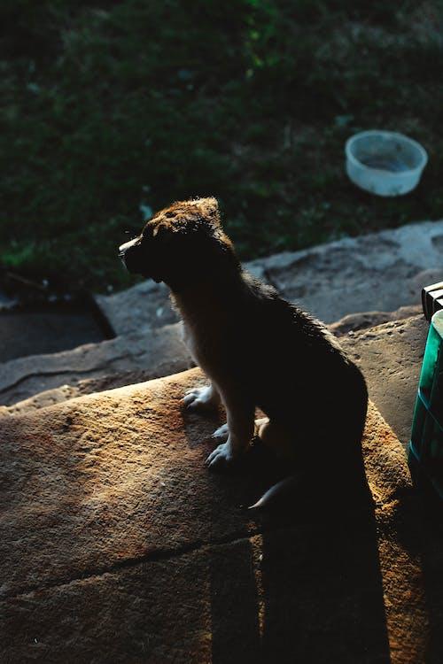 Fotos de stock gratuitas de noche, perro, perros, puesta de sol
