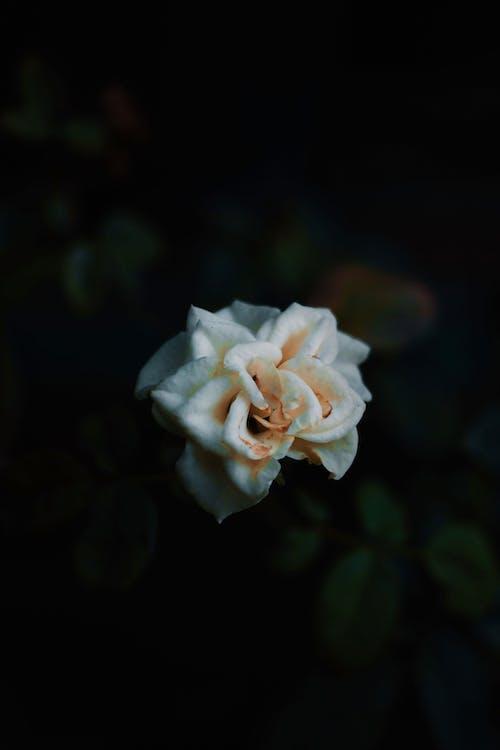 Kostnadsfri bild av #plants, blad, blomma, blommande blomma