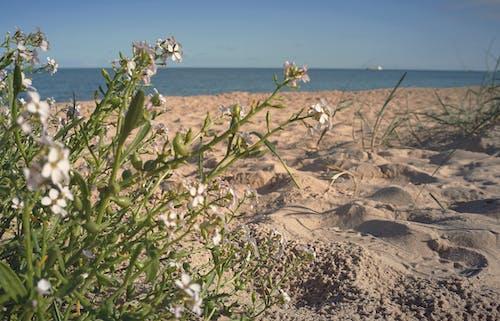 Photos gratuites de bord de mer, centrales, côte, côtier