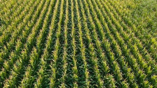 alan, arazi, bitki örtüsü, büyüme içeren Ücretsiz stok fotoğraf