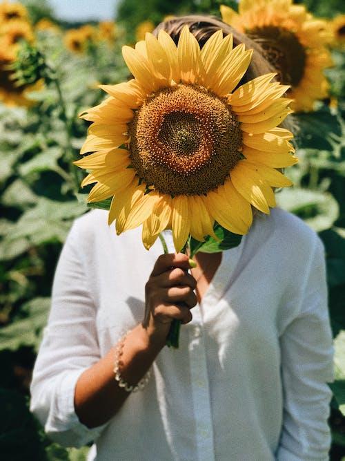 Photos gratuites de agriculture, anonyme, beauté
