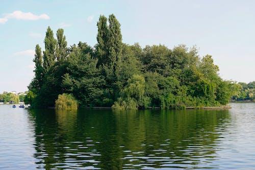 คลังภาพถ่ายฟรี ของ ทะเลสาป, ธรรมชาติ, พืชผัก, ภูมิทัศน์