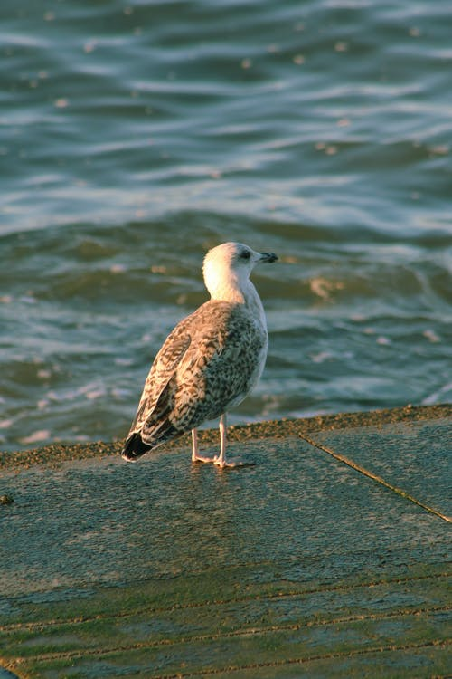 White and Brown Bird on Gray Concrete Dock