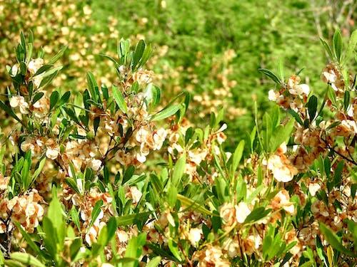 Free stock photo of green plants