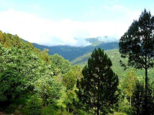 Free stock photo of mountains, tree