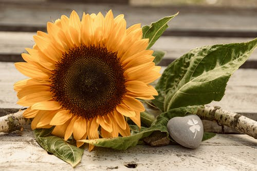 Darmowe zdjęcie z galerii z dekoracja, flora, fröhliche stimmung, jasny