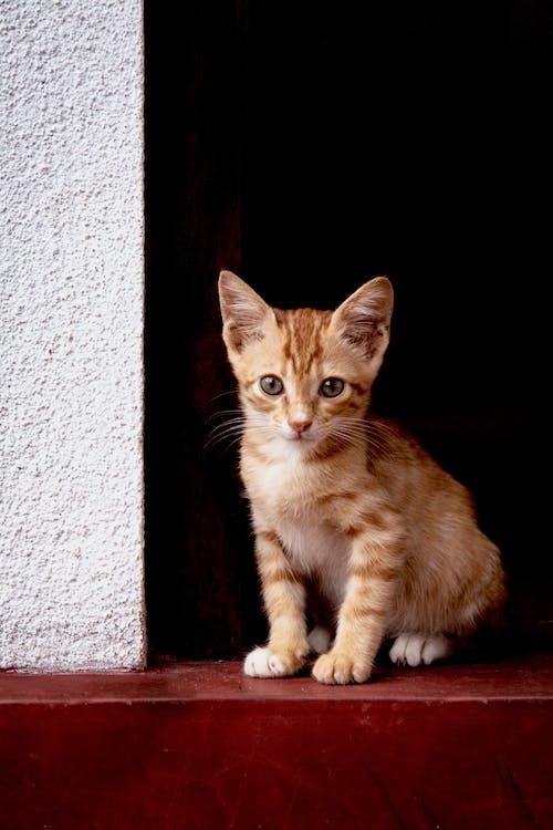 Imagine de stoc gratuită din adorabil, amuzant, animal, animal de casă