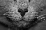 black-and-white, animal, fur