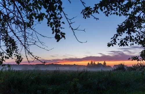 Free stock photo of evening, field, fog, mist