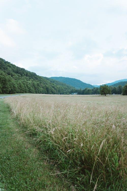 Free stock photo of mountain background, mountain view, mountains, national park