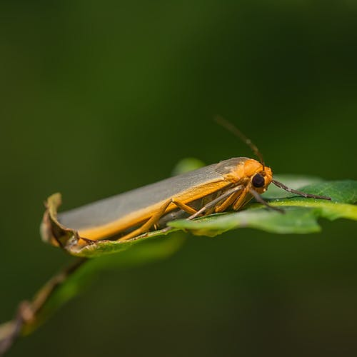Brown and Black Insect on Green Leaf in Close Up Photography