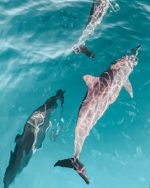 土耳其藍, 旅行, 水 的 免費圖庫相片