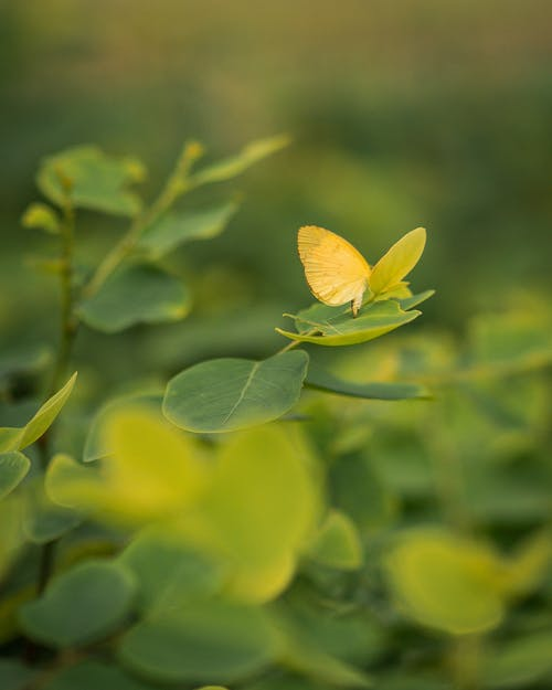 Free stock photo of yellow butterfly