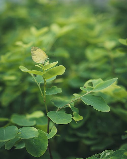 Free stock photo of green leaves, nature, yellow butterfly