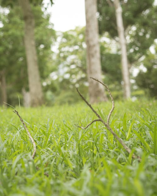 Free stock photo of grasslands, parks, trees