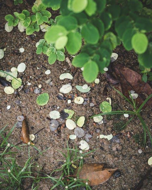 Free stock photo of ground, mud, soil