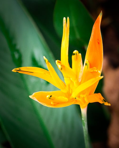 Free stock photo of flowers, orange flowers, poster, posters