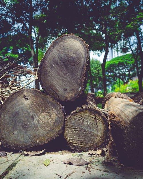 Free stock photo of deforestation, fallen logs, logs