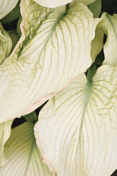 Immagine gratuita di bellissimo, bianco, chiudere, colore