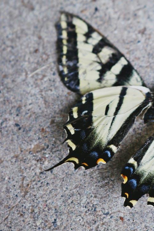 Immagine gratuita di ala, ali, animale, antenna