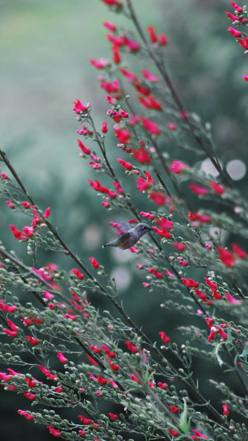 Immagine gratuita di albero, ambiente, arbusto, campo
