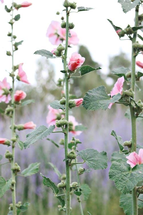 Immagine gratuita di agricoltura, arbusto, bocciolo, buccia