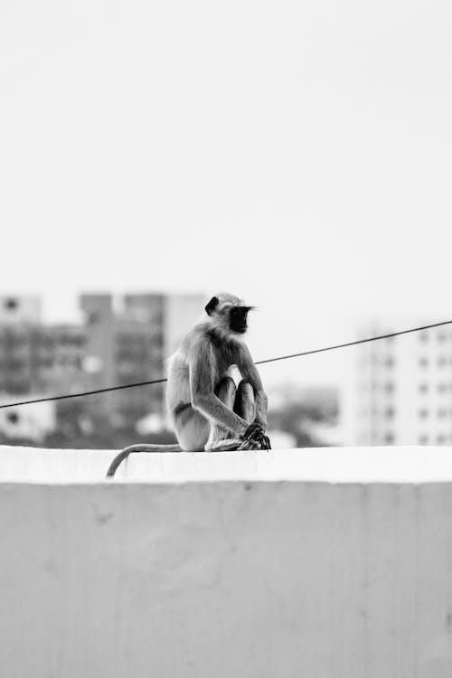 Monkey Sitting on Concrete Wall