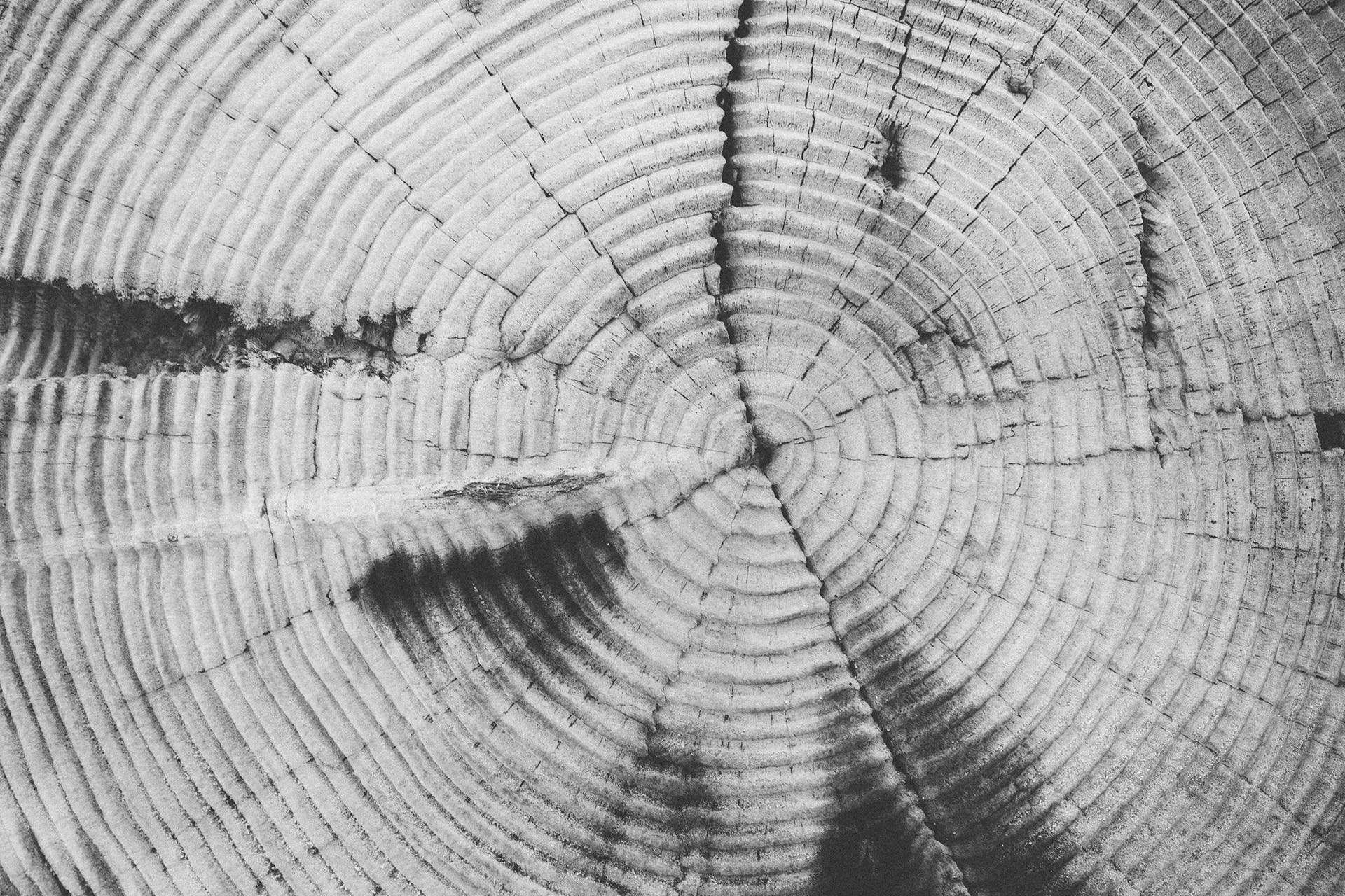 Grayscale Photography of Gray and Black Wood Stump