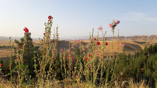 Free stock photo of beautiful background photo, beautiful view, best nature, best photo