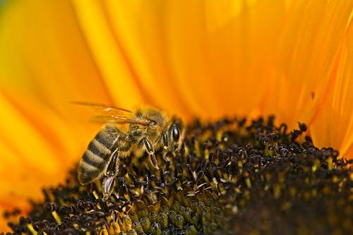 Photos gratuites de abeille, brouiller, couleur, espace extérieur