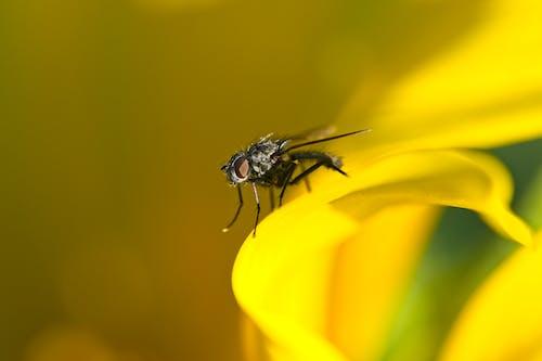 Photos gratuites de abeille, animal, brillant, brouiller