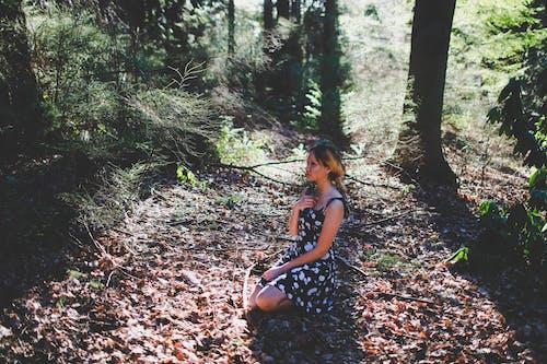 Free stock photo of asian, autumn, autumn color