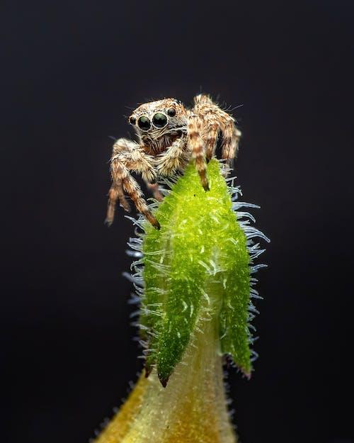 Little spider on plant on black background