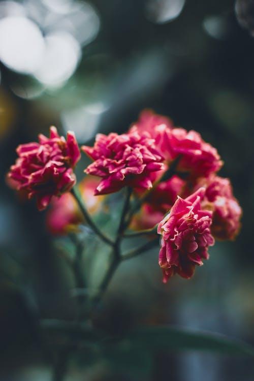 Gratis stockfoto met blad, bloem, bloemblaadje, bloemblad
