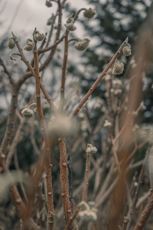 Free stock photo of beautiful flower, cotton flower, flower in bloom, winter