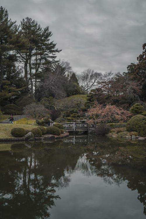 Základová fotografie zdarma na téma bazén, botanická zahrada, botanické zahrady