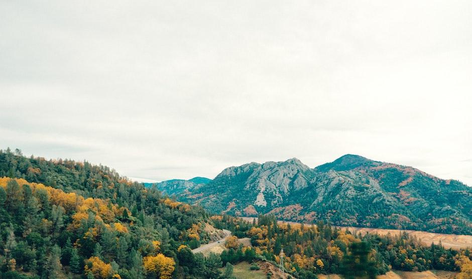 forest, hills, landscape