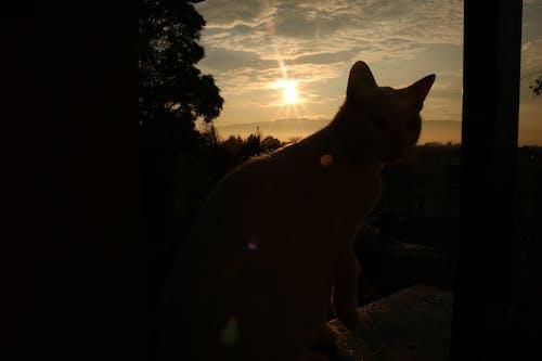 Free stock photo of gato