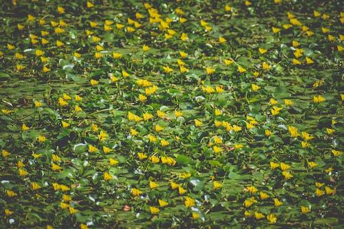 Gratis arkivbilde med årstid, bakken, blad, blomst