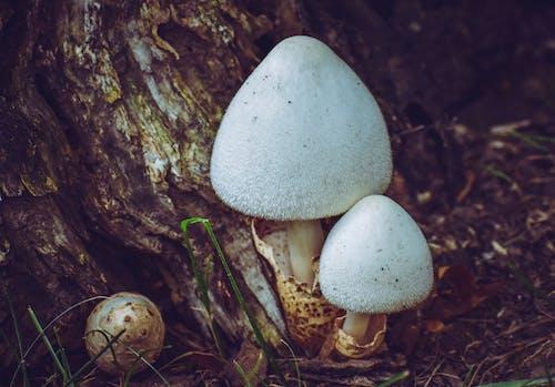 Gratis arkivbilde med blad, caps, egg, falle