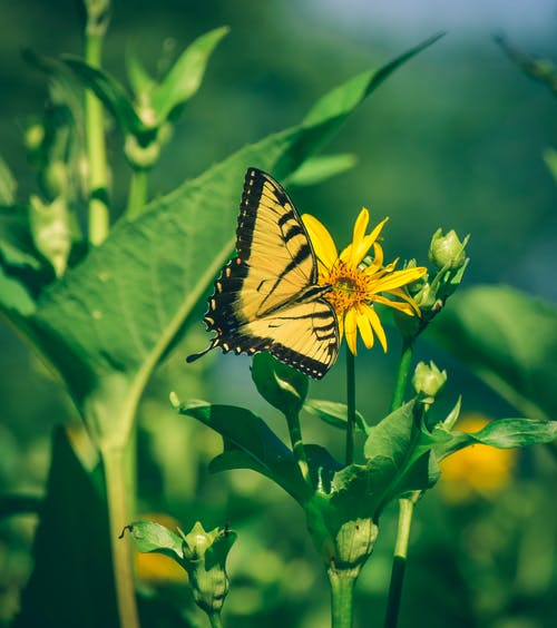 Bright butterfly with yellow wings pollinating blooming flower against green leaves in sunny day