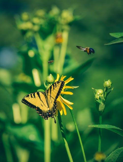 Bright butterfly pollinating flower in garden