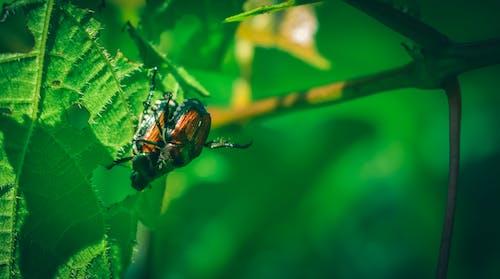 Gratis arkivbilde med bille, biologi, blad, blomst
