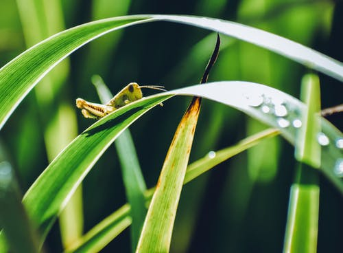 Gratis arkivbilde med bambus, blad, dråpe, dugg
